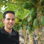 'Binnenlandse afzet Hollandse papaja's komt op gang'