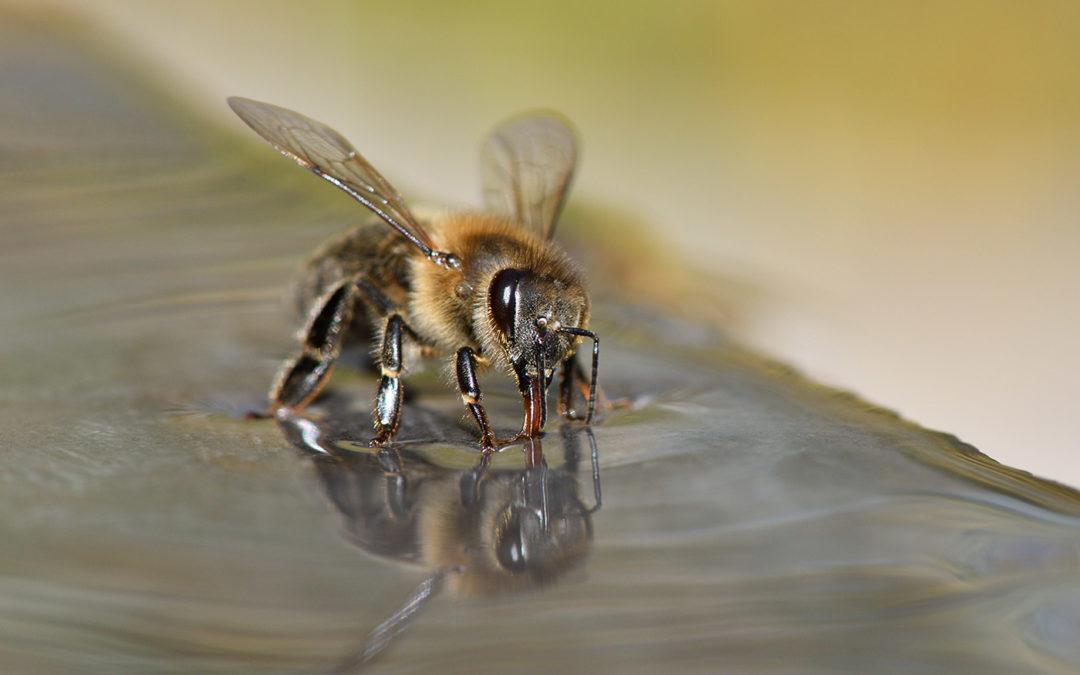 Insecten kunnen ziekten opsporen aan de hand van hun geur