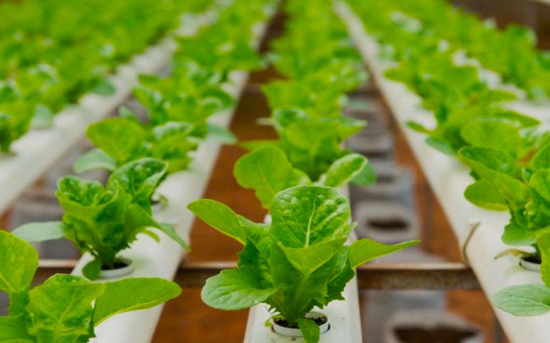 Autonomous Greenhouse Challenge deze week van start