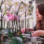 Aantal bladeren en gewicht indicatie aantal bloemstengels