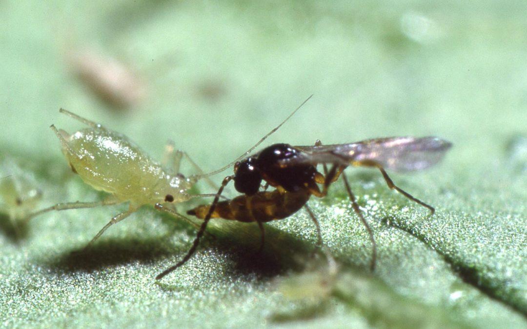 'Beestjes en biorationals staan aan de basis van IPM'