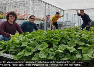 Proef met wasabi op water tijdens tuinbouw studieproject