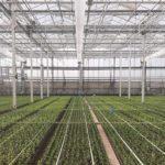 Nieuwe full LED-lichtinstallatie en hogere plantdichtheden
