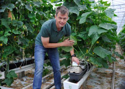 'Organisch substraat zorgt bij ons voor weerbaardere plant'