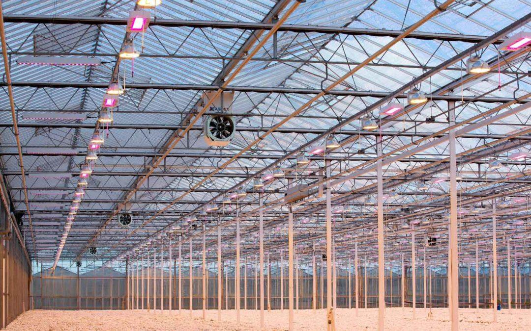 'Tijd rijp voor praktijkproeven met full-LED bij chrysant'