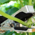 Nieuwe bladkniprobot voor hogedraadteelt komkommers