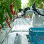 Nieuwe multifunctionele robot oogst zelfstandig tomaten