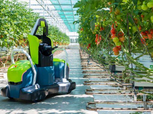 Eerste volautomatische bladsnijrobot voor tomaat op de markt