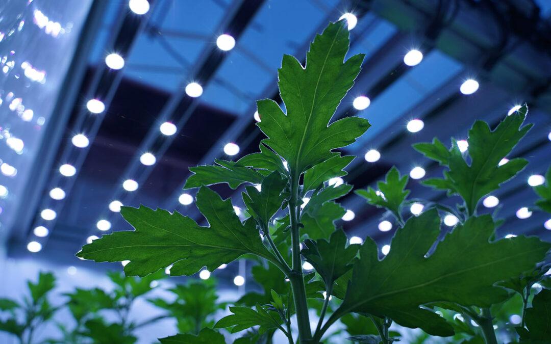 Lichtkwaliteit onderzoeken met nieuwe sensor